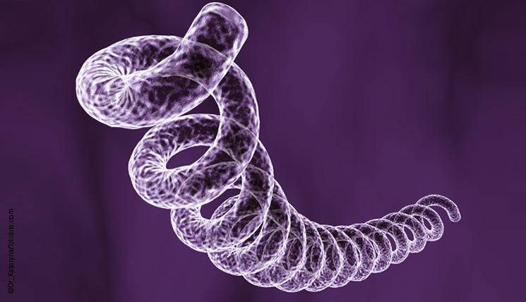 Syphilis - CDC Fact Sheet